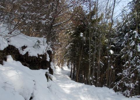 Durch den Winterwald zur Innsbrucker Hungerburg.