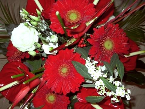 """Die """"Alpha-Blumen"""" ..."""