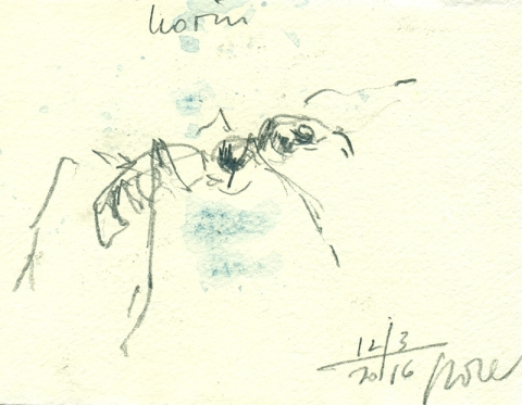 web_ant_portrait
